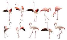 A Large Set Of Flamingos Isola...