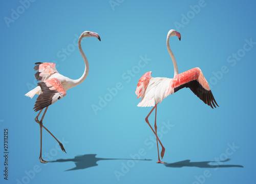 Garden Poster Flamingo beautiful pink flamingo posing. on blue background