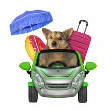 The Dog Is Driving To The Seaside. There Are A Umbrella, An Inflatable Circle And A Suitcase In His Car. White Background. Isolated.