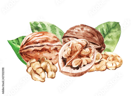 Obraz Watercolor hand painted walnuts and leaves illustration isolated on white background - fototapety do salonu