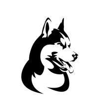 Purebred Siberian Husky Portra...