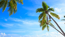 Coconut Palm Trees On Blue Sky With White Clouds.