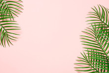 Tropical Leaves On Pink Background.