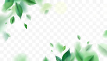 Green Spring Nature Background With Leaves