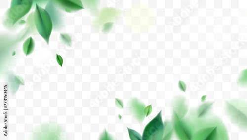 Obraz Green spring nature background with leaves - fototapety do salonu
