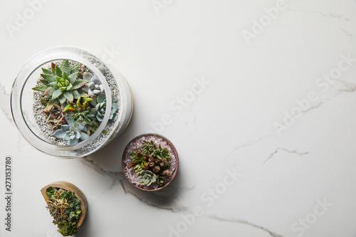Poster Pays d Europe top view of green succulents in flowerpots on white marble background