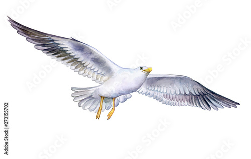 Carta da parati seagull on the fly isolated on white background