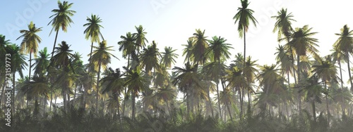 Photo sur Aluminium Gris Jungle in the fog at sunrise, palm trees in the haze