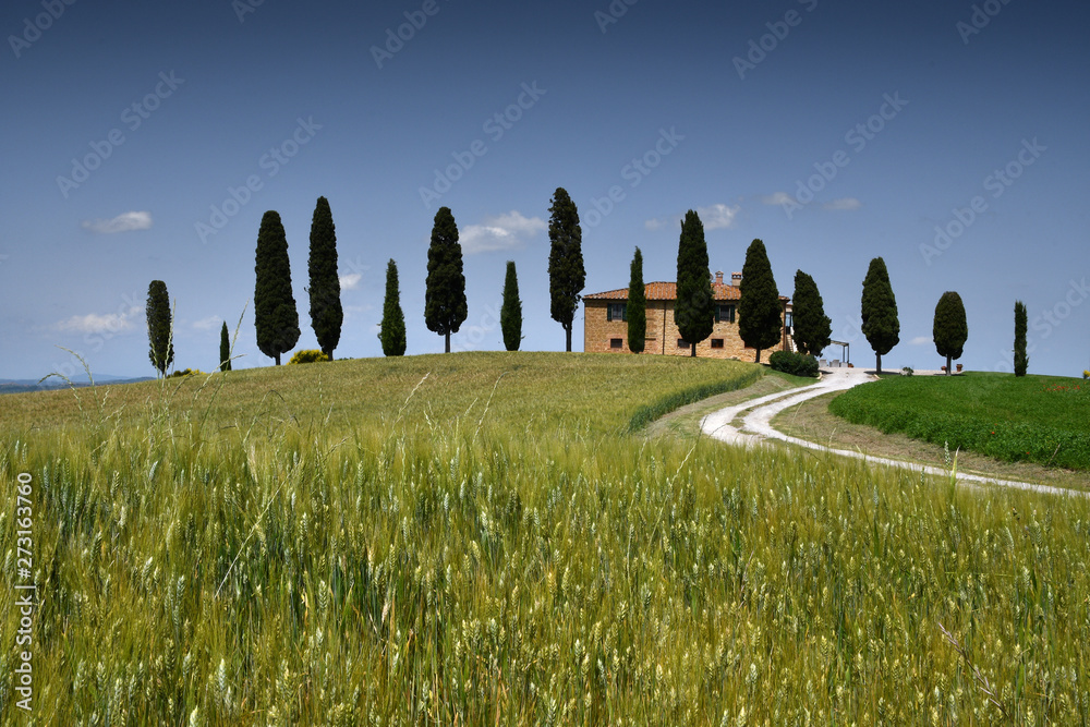 Pienza, Tuscany - June, 2019: Typical Tuscany landscape, farmland I Cipressini. Italian cypress trees and wheat field with blue sky. Located at Pienza (Siena). Italy