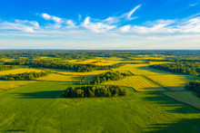 Top Aerial View Of Green Fields And Meadows In Summer. Abstract Landscape With Lines Of Fields, Grass, Trees, Sunny Sky And Lush Foliage. Landscape With Drone.