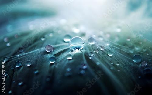 Foto op Canvas Macrofotografie baclieu1