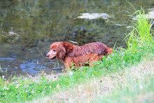 Cute Dog Is Played Near The Pond