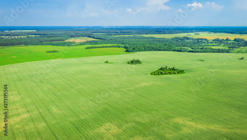 Foto op Plexiglas Groene Summer rural landscape. Picturesque rural fields from a bird's eye view. Aerial photography from drone