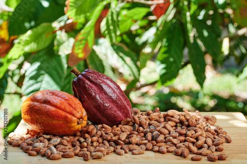 Fotografía  Colorful raw cacao fruits