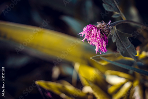 Fotografía  a drooping flower in the grass is bent from sadness and longing during a drought