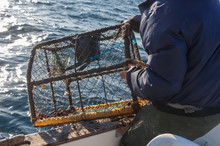Fisherman With Oilskin Jacket Bringing Back Lobster Pot In A Boat In Brittany