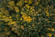 Aerial View Of Yellow Tree Top...