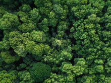 Aerial View Of Forest In Greece