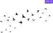 A flock of flying birds. Transparent background.