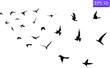 Flight of birds in the wild. Birds in sky. Silhouette.