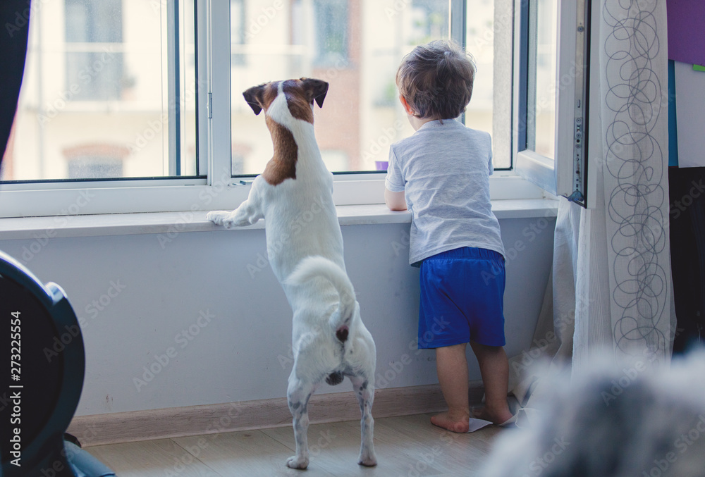 Fototapeta little boy and dog look out the window