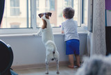 little boy and dog look out the window
