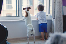 Little Boy And Dog Look Out Th...