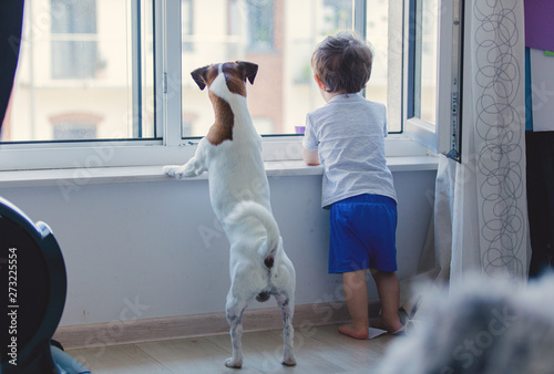Fototapeta little boy and dog look out the window obraz