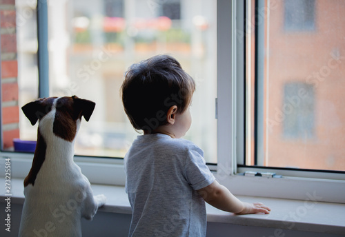Fotografija little boy and dog look out the window