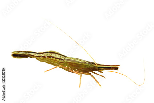 Alive Shrimp Pandalus Latirostris Isolated On White Background Closeup Buy This Stock Photo And Explore Similar Images At Adobe Stock Adobe Stock