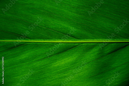 Fotografía  Green leaf texture background, Leaf cell structure occurs naturally