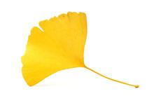 Yellowginkgo Leaf On White Background