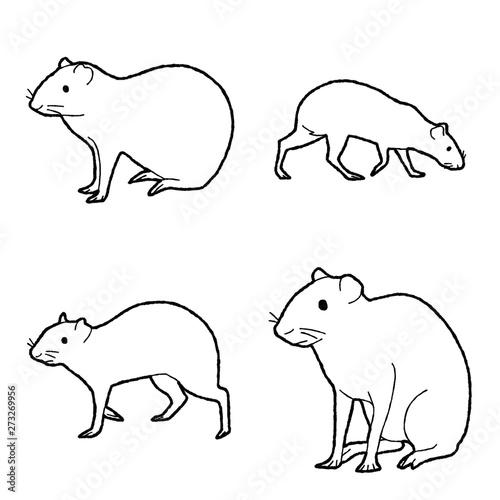 Agouti Vector Illustration Hand Drawn Animal Cartoon Art Wallpaper Mural