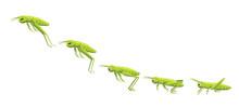 Grasshopper Jumping Frame Sequ...