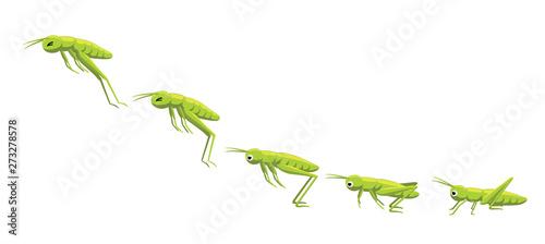 Photo Grasshopper Jumping Frame Sequence Animation Cartoon Vector Illustration