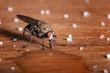 canvas print picture - Makroaufnahme einer trinkender Fliege