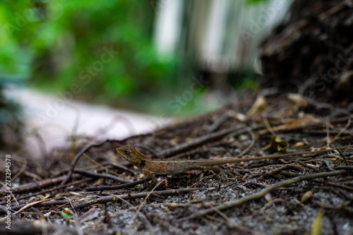 Photo Stands Asia Country Geko