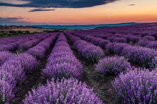 Fototapeta Lavender obraz na płótnie