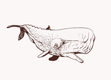 Graphical Vintage Whale,vector Retro Illustration, Sea-food
