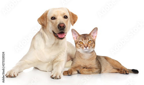 mata magnetyczna Cat and dog together