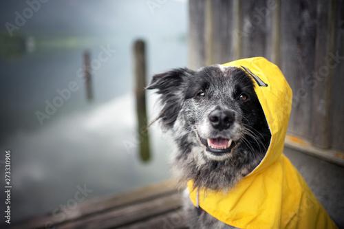 Photo  Dog with rain coat at the lake. Dog in the rain.