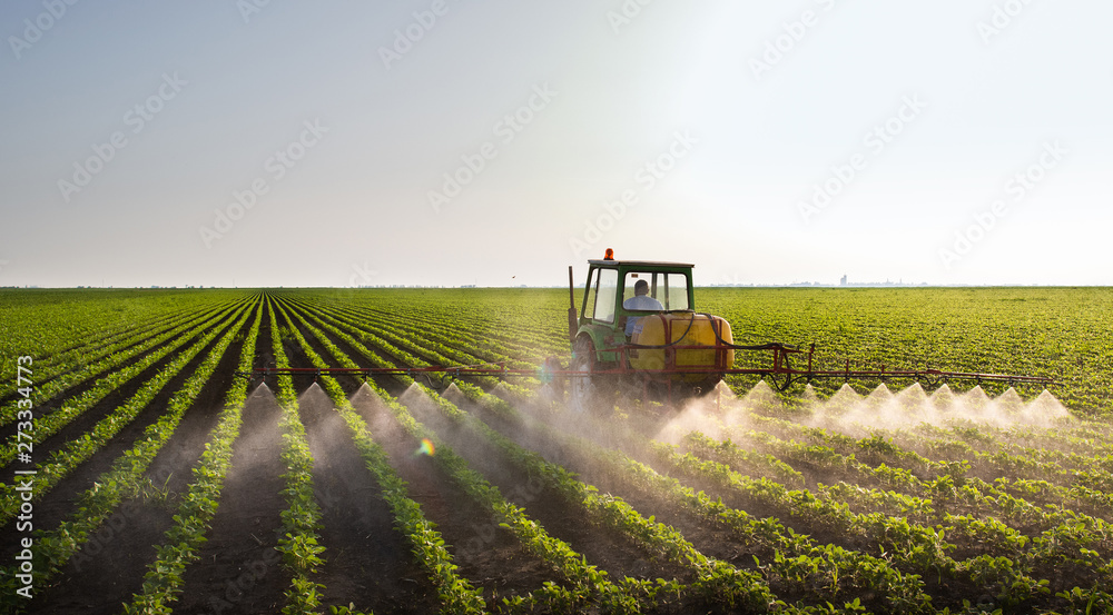 Fototapety, obrazy: Tractor spraying soybean field