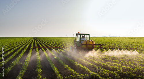 Fototapeta Tractor spraying soybean field obraz