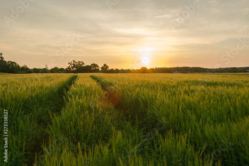 Foto auf Gartenposter Landschappen Technological path in barley cereal and sunset