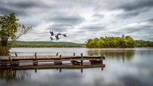 Dock And Canadian Geese In Flight On Swartswood Lake In Swartswood Lake State Park, NJ