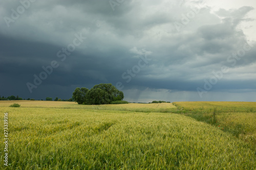 Recess Fitting Culture Cloudy dark sky and rain over trees in a field of grain
