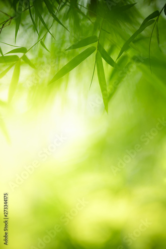 Pinturas sobre lienzo  Closeup nature view of green leaf on blurred greenery background in garden with copy space for text using as summer background natural green plants landscape, ecology, fresh wallpaper concept