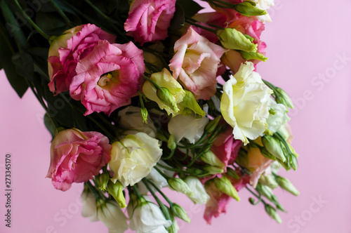 Fototapeta Close-up of very beautiful pink and white flowers on the soft pink background. Bouquet of fresh perfect eustoma. Springtime and summer concept. Space for text.  obraz na płótnie