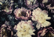 canvas print picture - Vintage bouquet of beautiful peonies on black. Floristic decoration. Floral background. Baroque old fashiones style. Natural flowers pattern wallpaper or greeting card