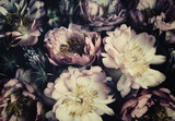 Vintage bouquet of beautiful peonies on black. Floristic decoration. Floral background. Baroque old fashiones style. Natural flowers pattern wallpaper or greeting card - 273354360